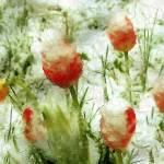 """Suddenly Snow"" by RCdeWinter"