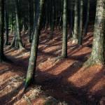 """pine shadows"" by olimoorman"