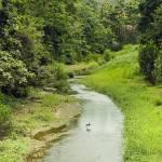 """""""Crane in Stream, Puerto Rico"""" by ipsofactophoto"""