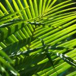 """Palms Rendered as Art II"" by ipsofactophoto"