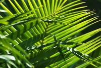 Palms Rendered as Art II
