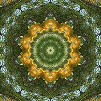 Yellow Tree Flower Kaleidoscope Art 1