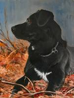 Casey-Black Lab