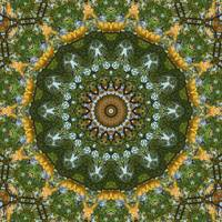 Yellow Tree Flower Kaleidoscope Art 4