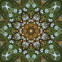 Yellow Tree Flower Kaleidoscope Art 5