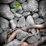 """""""Living stones"""" by wenzel"""