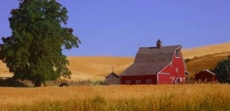 Washington Wheat Farm