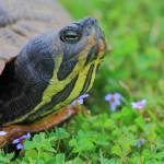 """""""Big Turtle-Little Flower"""" by robbdee40"""