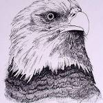 """American Bald Eagle"" by crazyabouthercats"