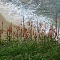 Hawaii Beach Flowers by Roger Dullinger