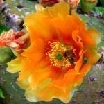 """""""Nature in the Wild - Cactus Honey"""" by lucyna"""