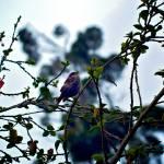 """""""Sparrow"""" by MelanieDoty"""