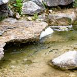 """The creek"" by christopherleonard"