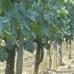 """""""Standing Vines"""" by fernee-bis"""