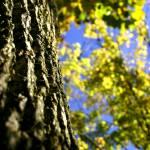 """""""Tree Trunk"""" by AGConrad"""