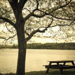 """Springtime Massabesic"" by triemichaud"
