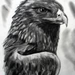 """Eagle"" by silverwind"