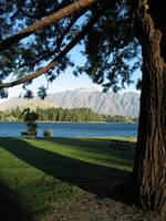 Queenstown Tree