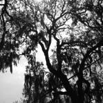 """""""Savannah, GA"""" by gaperry"""