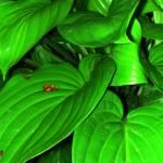 """""""garden 12"""" by shankargallery"""