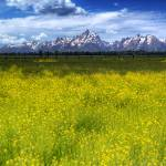 """Spring Around The Tetons"" by JTPatterson"