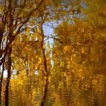 """Golden wake...!!!"" by Woodsman"