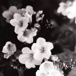 """White Light"" by bcb_arts"