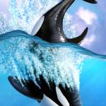 """Orca 2"" by jerrylofaro59"