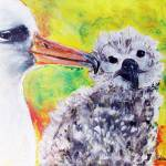 """Mom and baby Albatross"" by adriennemyles"
