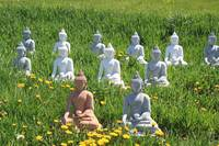 Meditation Buddhas for Peace
