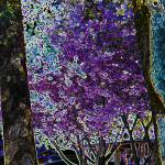 """cherry blossom"" by amandaheather"