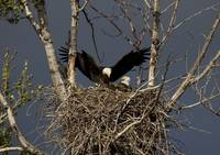 Returning Home to the Nest