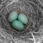 """""""Nest"""" by JParksPhotography"""