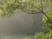 Web Along The Watauga