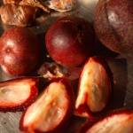 """Cocum, or Bindnna, a jungle plum with amazing qual"" by fredericknoronha"