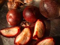 Cocum, or Bindnna, a jungle plum with amazing qual