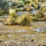 """River Grasses (T06992bc)"" by Arizona_Photography"