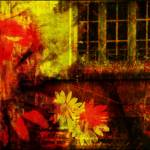"""detail poppies daises window"" by fernee-bis"