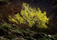 lemon yellow tree