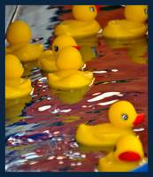 Rubber Duckies
