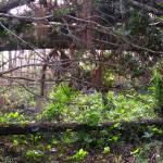 """Trees After Hurricane"" by VirginiaZuelsdorf"