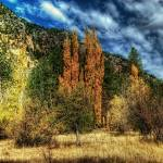 """Cypress Trees (T05905bc)"" by Arizona_Photography"