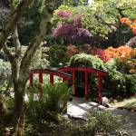 """Japanese Garden Bridge with Rhododendrons"" by Groecar"