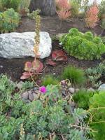 Channel Islands Harbor Cactus Garden