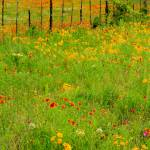 """Sprawling Blooms"" by tjjoyce"