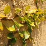 """Crawling Flora"" by tjjoyce"