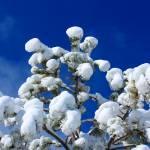 """""""Marshmallow Tree"""" by tjjoyce"""