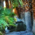 """Palm Pond (T06716bc)"" by Arizona_Photography"