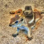 """Ground Squirrel (J0011bc)"" by Arizona_Photography"