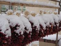 Santa Fe: Ristras in Snow